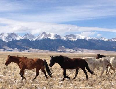 Westcliffe Residential Lots & Land For Sale: 1230 Brokenhand Rd
