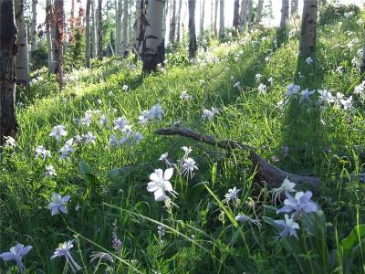 Silverthorne Residential Lots & Land For Sale: 445 County Road 1727 Road