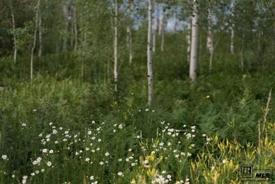Routt County Residential Lots & Land For Sale: 2015 Black Bear Ln