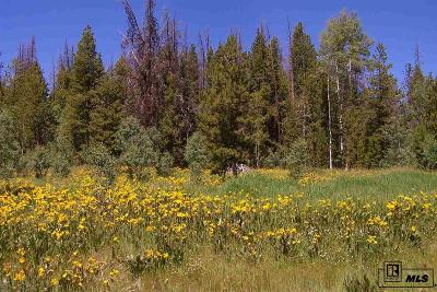 Routt County Residential Lots & Land For Sale: 20900 Filly Trail E