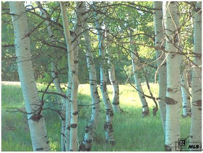 Steamboat Springs Residential Lots & Land For Sale: Tbd County Road 179 Lot 24