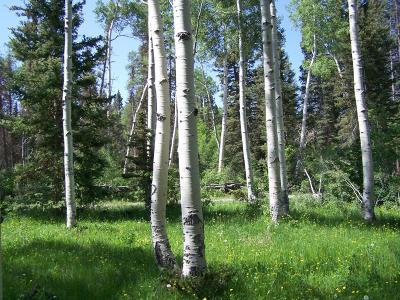 Montrose Residential Lots & Land For Sale: Tbd Elk Drive #7