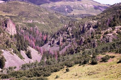 Telluride Residential Lots & Land For Sale: 297 Gray Head Lane #15C-1