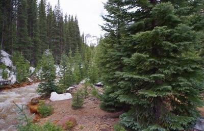 Ouray Residential Lots & Land For Sale: Tbd Highway 550