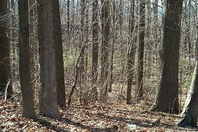 Middletown Residential Lots & Land For Sale: 1167 Saybrook Road