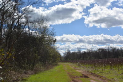 Marianna Residential Lots & Land For Sale: Hwy 73