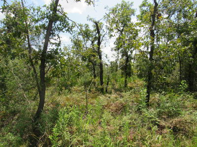 Calhoun County Residential Lots & Land For Sale: NW Miller Road