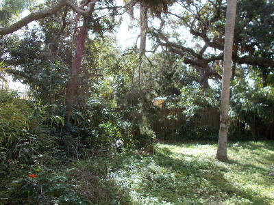 Volusia County Residential Lots & Land For Sale: 509 S Pine Street