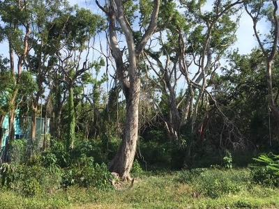 Residential Lots & Land For Sale: Mahogany Drive