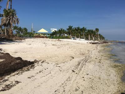 Residential Lots & Land For Sale: lot 8 Overseas Highway