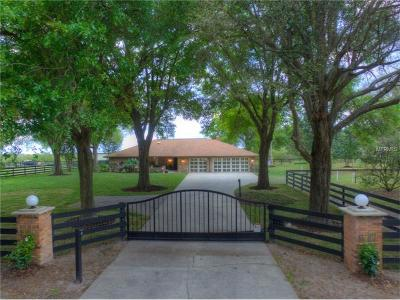 Dade City Single Family Home For Sale: 18211 Clay Hill Road