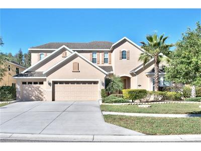 Tampa Single Family Home For Sale: 19108 Sweet Clover Lane