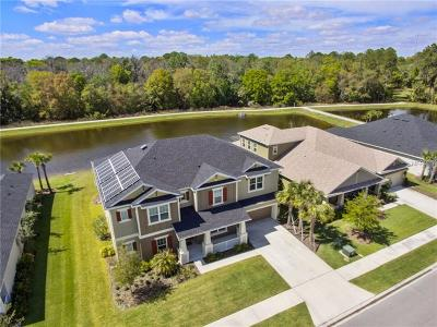 Wesley Chapel Single Family Home For Sale: 1723 Virginia Willow Drive
