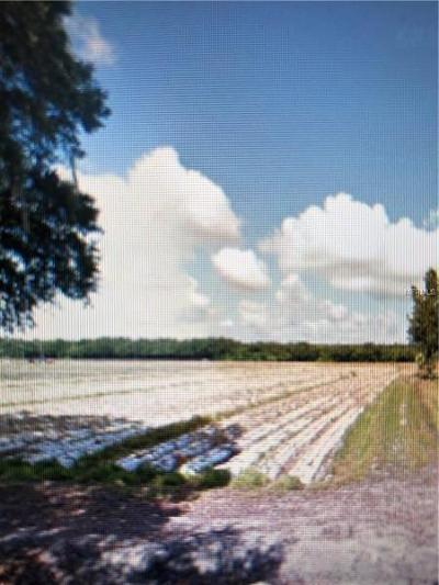 Plant City Residential Lots & Land For Sale: 0 Jap Tucker