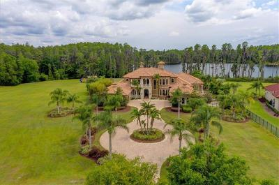 Hillsborough County, Pasco County, Pinellas County Single Family Home For Sale: 17221 Breeders Cup Drive