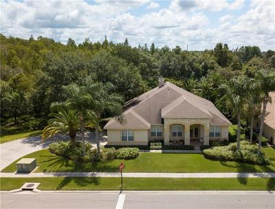 Lutz Single Family Home For Sale: 18615 Chemille Drive