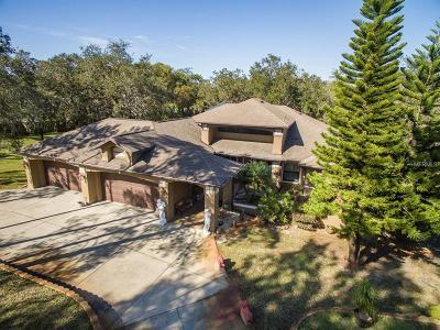 New Port Richey Single Family Home For Sale: 6701 Bandura Avenue
