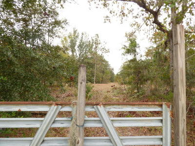 Orange Park Residential Lots & Land For Sale: Taylor Ave