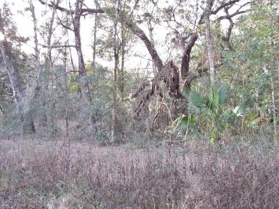 Dunnellon Residential Lots & Land For Sale: SW 102 Place