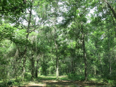 Williston FL Residential Lots & Land For Sale: $750,000