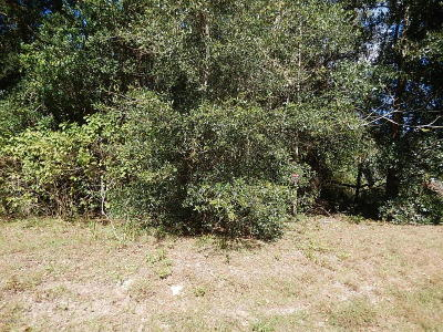 Belleview Residential Lots & Land For Sale: SE 124th Street