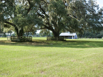 Ocala Farm For Sale: 1196 SW 125th Avenue