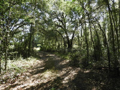 Residential Lots & Land For Sale: SW 154th Street