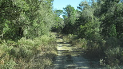 Citrus County Residential Lots & Land For Sale: 7662 W Rainbow Street