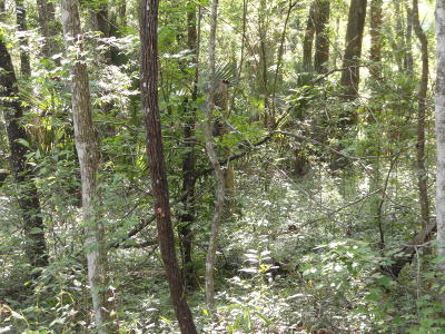 Belleview Residential Lots & Land For Sale: SE 131st Place