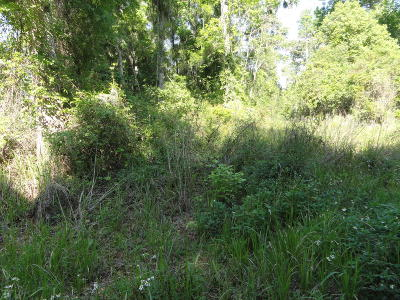 Belleview Residential Lots & Land For Sale: SE 42nd Court