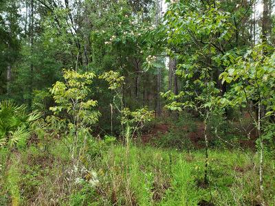 Ocala Residential Lots & Land For Sale: Lot 6.7 SW 14th Street