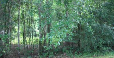 Pensacola Residential Lots & Land For Sale: 8541 Vickie St