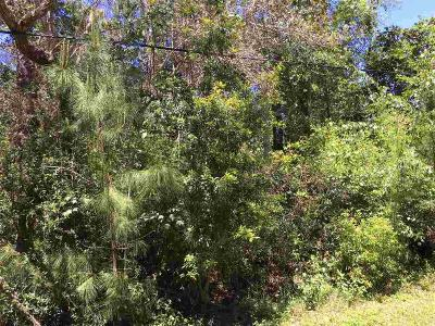 Gulf Breeze Residential Lots & Land For Sale: Laurel Dr