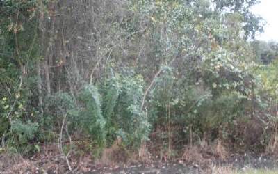 Lake Placid Residential Lots & Land For Sale: 1039 Lake Carrie Dr
