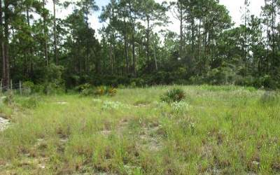 Lake Placid Residential Lots & Land For Sale: 108 Impatiens Street