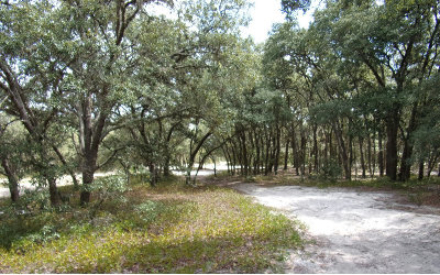 Avon Park Residential Lots & Land For Sale: 2210 W Nautilus Rd