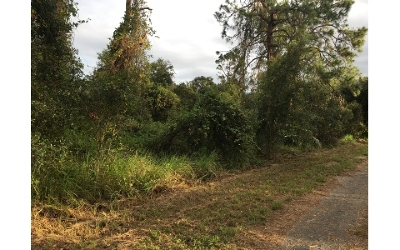 Residential Lots & Land For Sale: 1027 Robin St