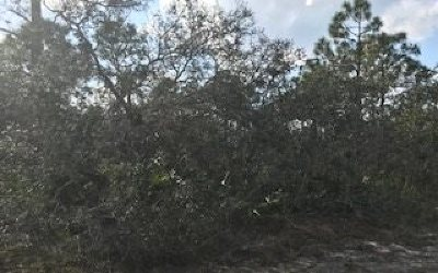Residential Lots & Land For Sale: 4617 Bonnie