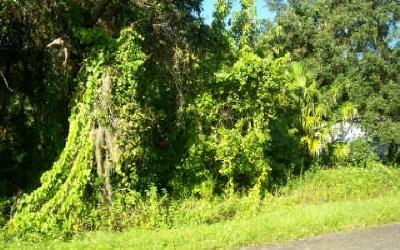 Avon Park Residential Lots & Land For Sale: 1713 N Ernest Rd