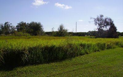 Avon Park Residential Lots & Land For Sale: 1700 N Morningside Rd