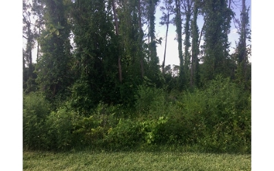 Lake Placid Residential Lots & Land For Sale: 3007 Jacaranda Ave