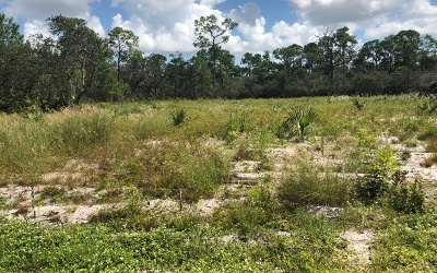 Residential Lots & Land For Sale: 1116 Butternut Rd