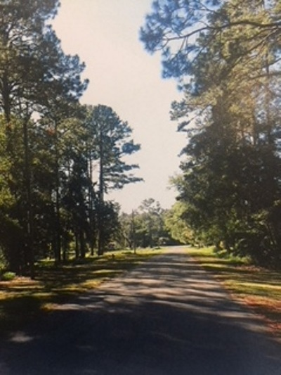 Leon County Residential Lots & Land Back On Market: Xxx Tapley Trail #Tapley T