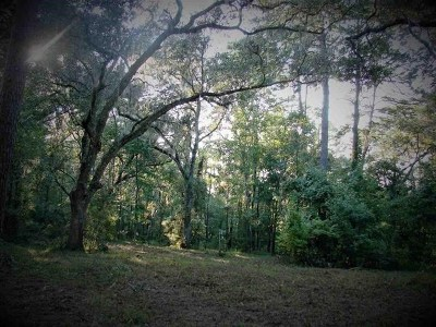 Leon County Residential Lots & Land New: 323 Carr Lane