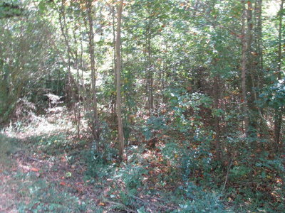 Chatsworth, Eton Residential Lots & Land For Sale: 154 S Silvers Road