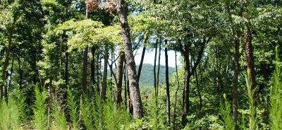 Big Canoe Residential Lots & Land For Sale: 9320 Blackwell Creek Way