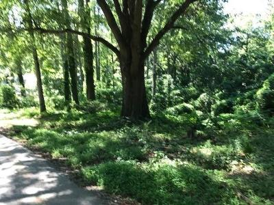 Marietta Residential Lots & Land For Sale: 309 Carruth Drive SE