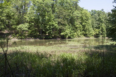 Residential Lots & Land For Sale: 1165 Pine Shores Cove