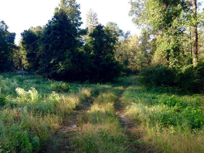 Edgefield County Residential Lots & Land For Sale: 520 Jeter Street