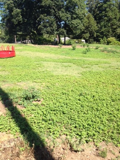 Martinez Residential Lots & Land For Sale: 4211 Day Road